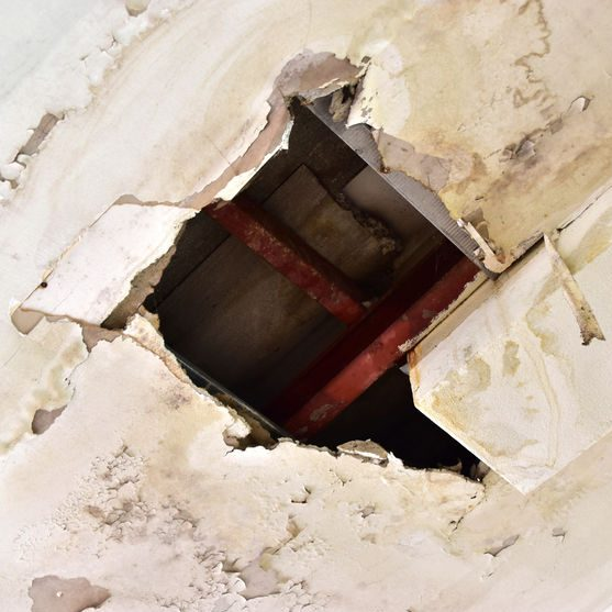 Home Water Damage Creates the Perfect Environment for Mold to Grow and Wood to Rot.